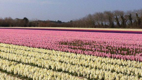 30 ans de fête des fleurs en Pays Bigouden